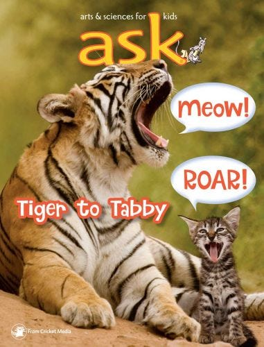 Tiger to Tabby