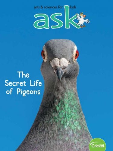 The Secret Life of Pigeons